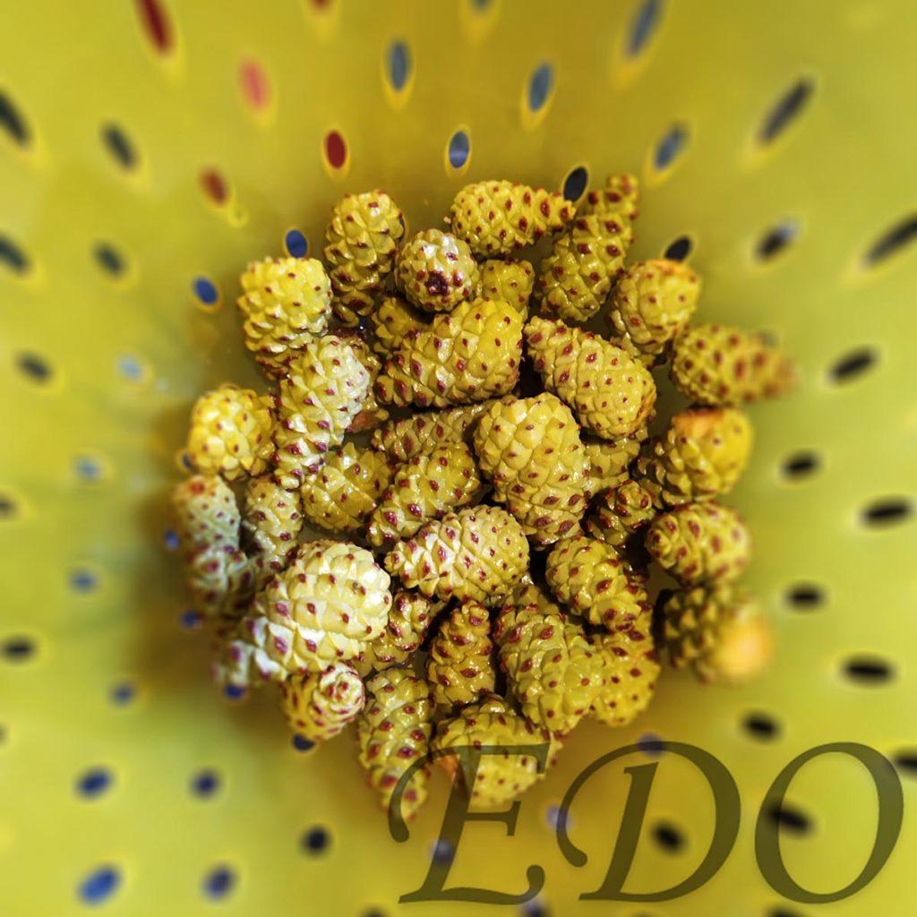 Мед сосны - красивые варенные шишечки