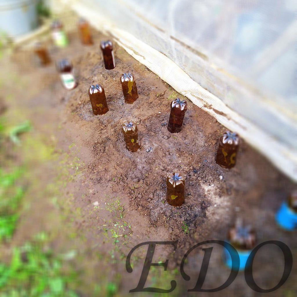 Бутылки пластиковые половинчатые сверху капусты.