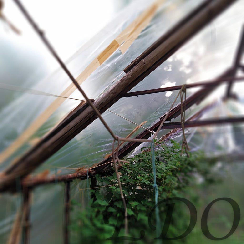 «Стройный куст» основа куда подвязываются огурцы
