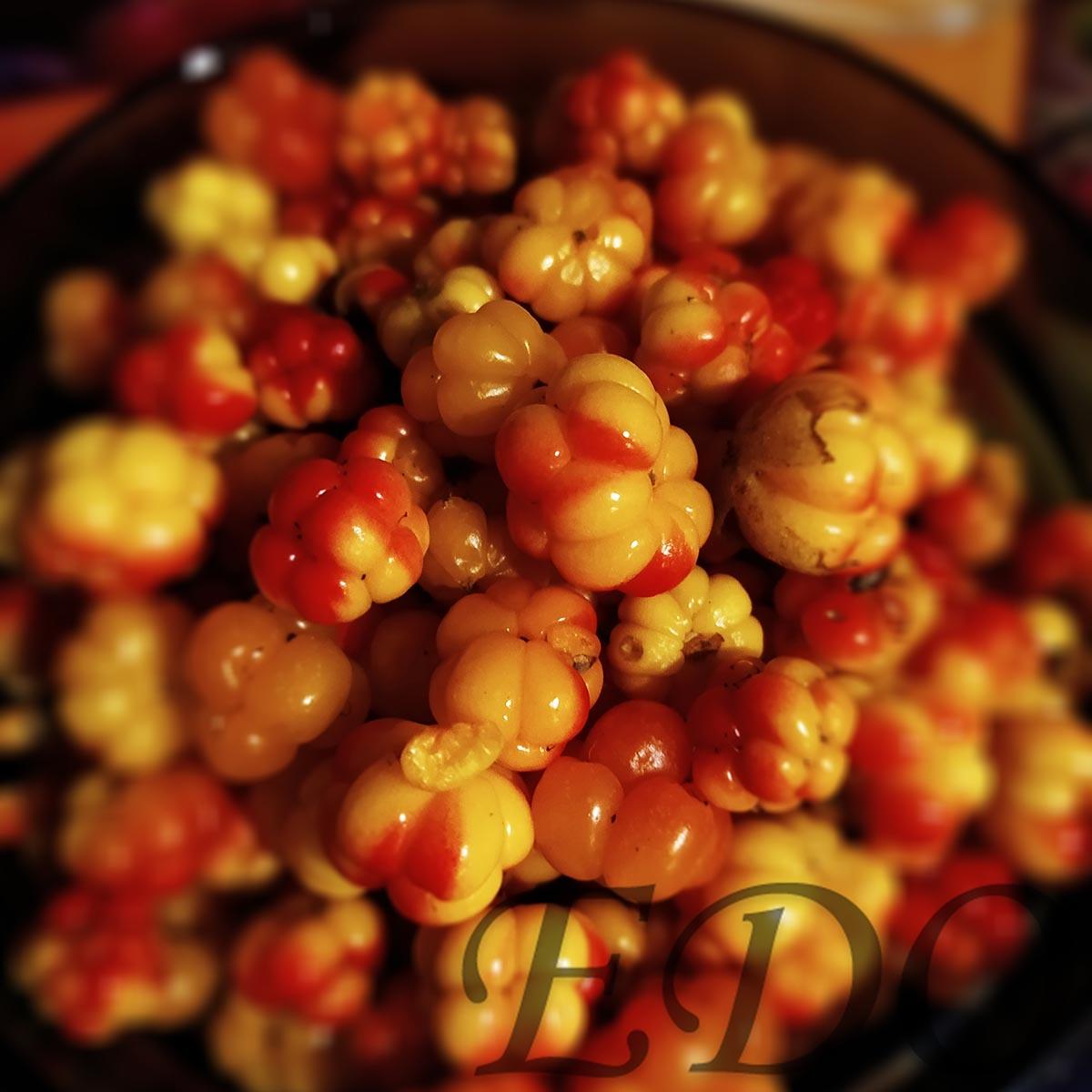 морошка чудо ягода тундры